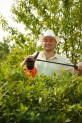 Postreky proti škodcom rastlín- insekticidy