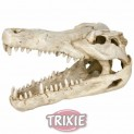 Lebka z krokodýla velká 14 cm