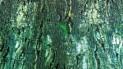 Pozadí do terária, oboustranné KŮRA/DEŠTNÝ PRALES 60x150 cm